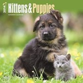 Kittens & Puppies The Perfect Pets