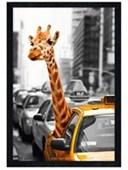 Black Wooden Framed New York Safari Local Commuter