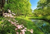 Park in the Spring Countryside Charm