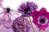 Purple Summer Florishing Flowers
