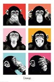Pop Art Chimps The Chimp