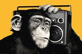 Boombox The Chimp