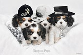 Gangsta Pups Keith Kimberlin