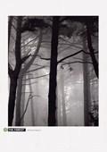 The Forest I Nicholas Pavloff
