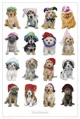 Dogs in Hats Keith Kimberlin