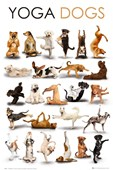 Yoga Dogs Fitness Fun