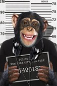 Mugshot Chimp
