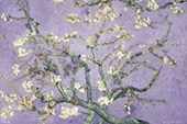 Purple Blossom Vincent Van Gogh