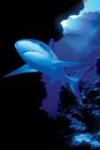 Shark in the Deep An Eerie Underwater Menace