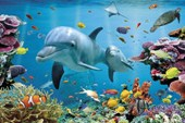 Underwater Dolphin Fantasy Tropical Dolphins