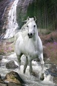 Horse in a Waterfall Bob Langrish