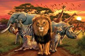 African Kingdom Call of the Wild!