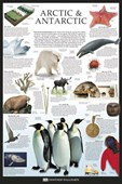 The Arctic & Antarctic Dorling Kindersley