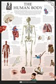 The Human Body Dorling Kindersley