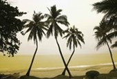 Palm Trees Hainan Island, China