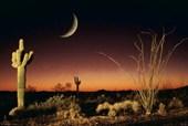 Desert Silhouette Arizona Landscape