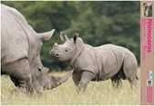 The Rhino Wildlife Fun Facts