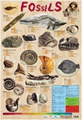 Fossils Educational Chart