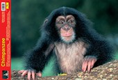 Animal World Chimpanzee