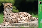 The Cheetah Wild Facts