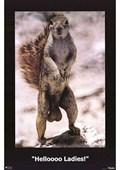 Helloooo Ladies! Squirrel
