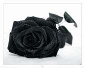 Gothic Rose Black Flower