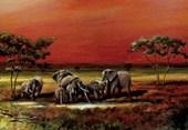 African Elephants African Oasis