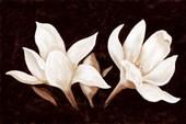 Perfect Petals Magnolia on Brown