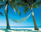 Hammock Between Palms Island Paradise