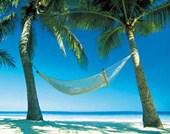 Hammock Between Palms Island Paradise