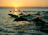 Dolphin Journey Sunset