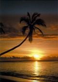 Sunset & Palm Tree Seascape