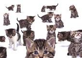 Curious Kittens Kittens