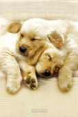 Sleeping Puppies Keith Kimberlin