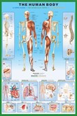 The Human Body and it's Organs Human Biology