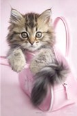 Kitten In A Handbag - Minnie Rachael Hale