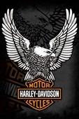 The Harley Davidson Eagle Harley Davidson