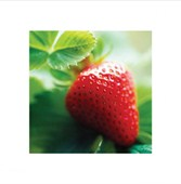 Strawberry Fresh Berry Fruit