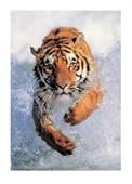 Running Free Tiger