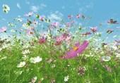 Meadow Full of Flowers 8 Sheet Giant Wall Mural