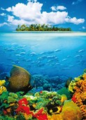 Treasure Island Tropical 4 Sheet Wall Mural