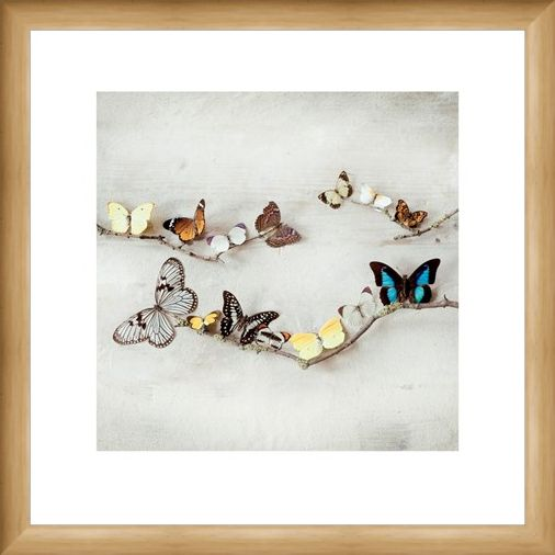 Framed Framed Array of Butterflies - Ian Winstanley