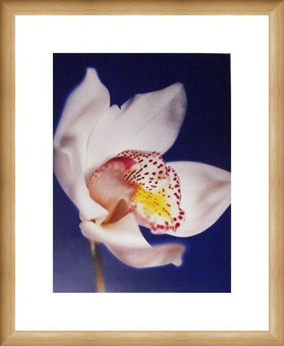 Framed Framed Orchid - Michael Banks