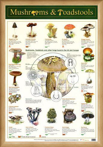Framed Framed Mushrooms & Toadstools - Fungi