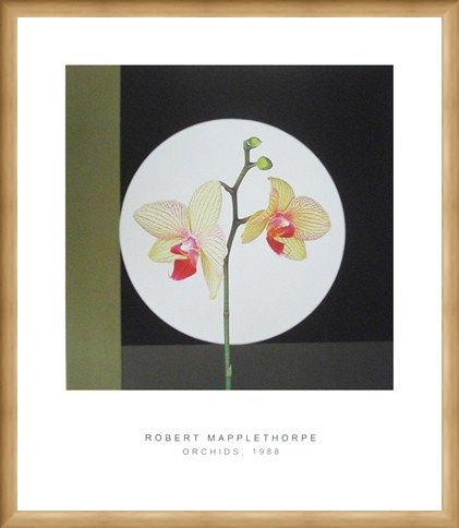 Framed Framed Orchids, 1988 - Robert Mapplethorpe