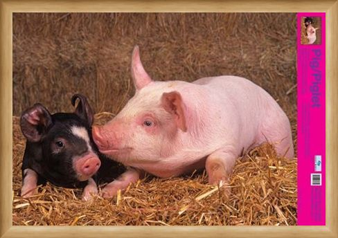Framed Framed Curly Tailed Cutie - Piglets