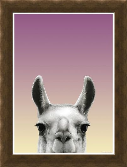 Framed Framed Llama - Inquisitive Creatures