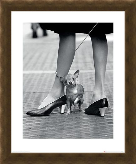Framed Framed Chihuahua - Time Life