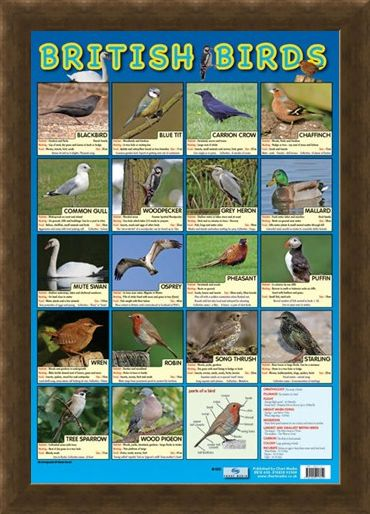 Framed Framed British Birds - Native British Birds