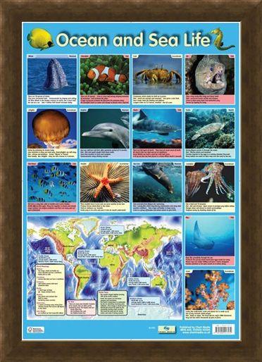Framed Framed Ocean and Sea Life - Sea Creatures